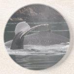 whales beverage coasters