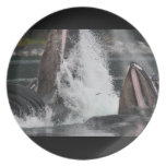 whales dinner plate