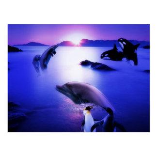 Whales dolphins penguins ocean sunset postcard
