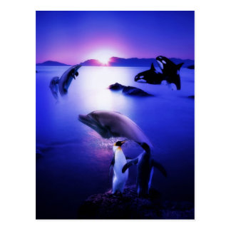 Whales dolphins penguins ocean sunset postcard