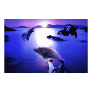 Whales dolphins penguins ocean sunset stationery