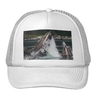 whales hats