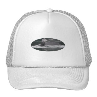 whales mesh hat