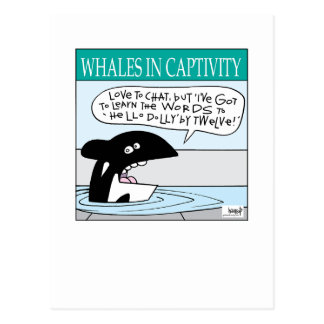 Whales In Captivity card by Graham Harrop