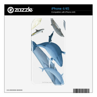 Whales iPhone 4 Decals