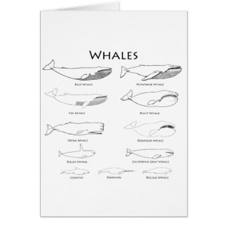 Whales (line art illustrations) greeting card