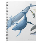 Whales Note Books
