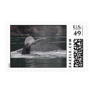 Whales Stamp