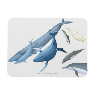 Whales Rectangular Photo Magnet