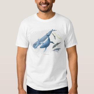 Whales T Shirt