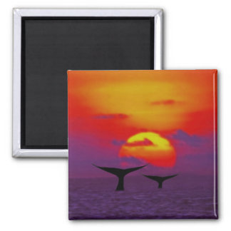 Whales tail at sunset magnet