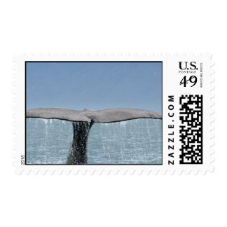 Whale's Tail Postage Stamp