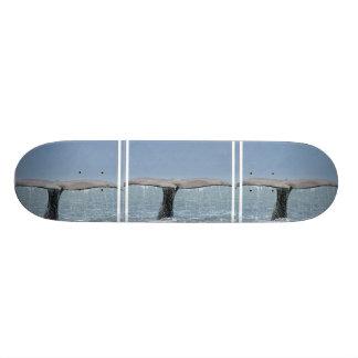 Whale's Tail Skateboard