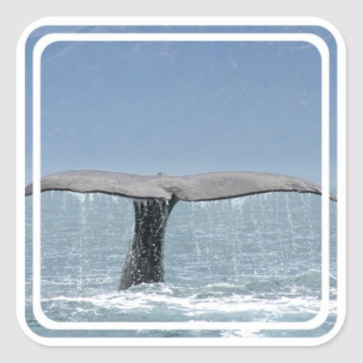 Whale's Tail  Stickers