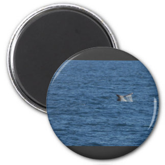 Whales Tails Ocean Refrigerator Magnets