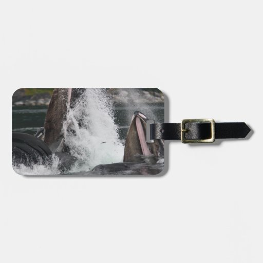 whales travel bag tags