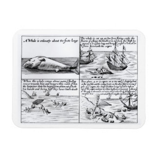 Whaling at Spitzbergen in 1611 (engraving) (b/w ph Flexible Magnet