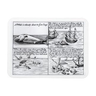 Whaling at Spitzbergen in 1611 (engraving) (b/w ph Rectangular Photo Magnet