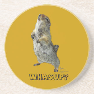 Whasup? Squirrel Coaster