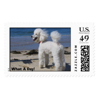 What A Day! Postage Stamp