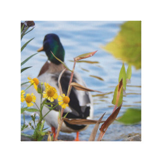 What a Duck Sees Canvas Print