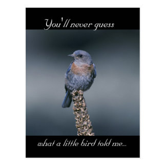 What a Little Bird Told Me Post Cards