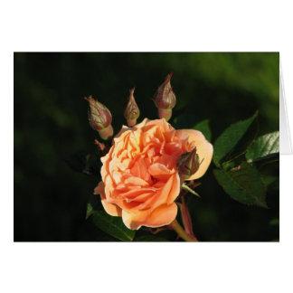 What a Peach 014 Card