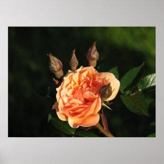What a Peach 014 Print