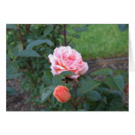 What a Peach 022 Greeting Cards