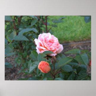What a Peach 022 Print