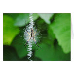 What a tangled web we weave greeting card