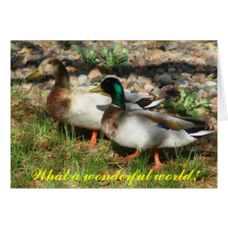 What a wonderful world! greeting cards