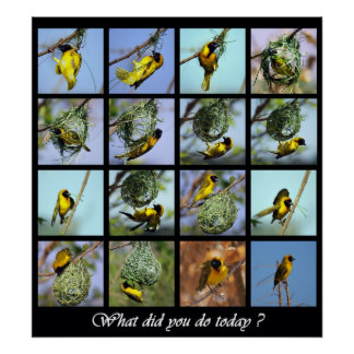 What did you do today - bird and nests poster