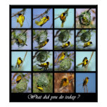 What did you do today - bird and nests posters