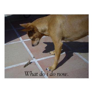 """""""What do i do now."""" Postcard"""