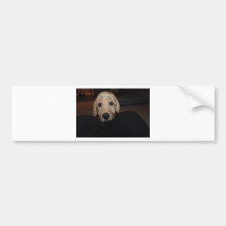 What Dog! Car Bumper Sticker