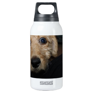 What Dog! Insulated Water Bottle