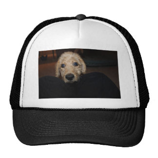 What Dog! Trucker Hat