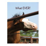 What EVER! Postcard