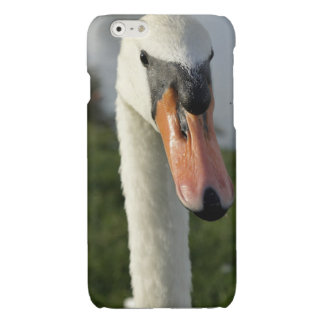 What Glossy iPhone 6 Case