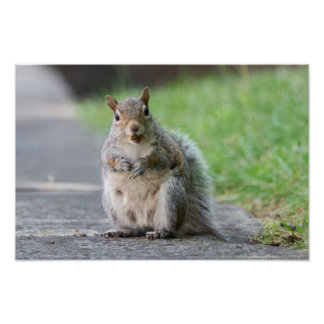 """""""What, I'm Pregnant!"""" Female Squirrel Poster"""