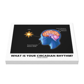 What Is Your Circadian Rhythm? Canvas Print