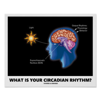 What Is Your Circadian Rhythm? Poster