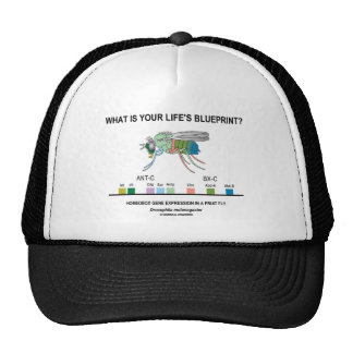 What Is Your Life's Blueprint? (Gene Expression) Hats