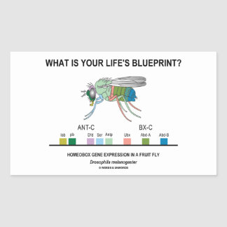 What Is Your Life's Blueprint? (Gene Expression) Rectangular Sticker