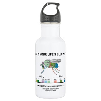 What Is Your Life's Blueprint? (Gene Expression) Water Bottle