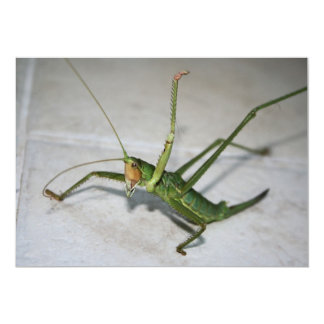 What Katydid Next Personalized Invite