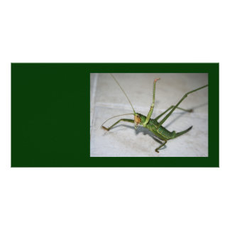 What Katydid Next Picture Card