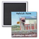 What No Ice Cream - Ostrich Farm 2 Inch Square Magnet