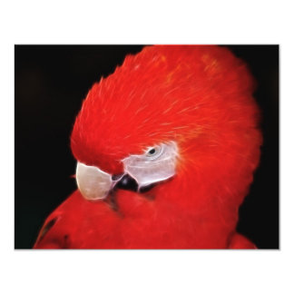 What now little parrot 4.25x5.5 paper invitation card